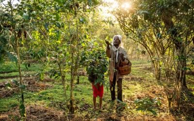 coffee-bird-ethiopia